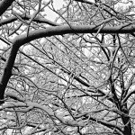 Snow-Trees-1