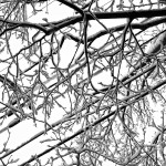 Snowy-Trees-2