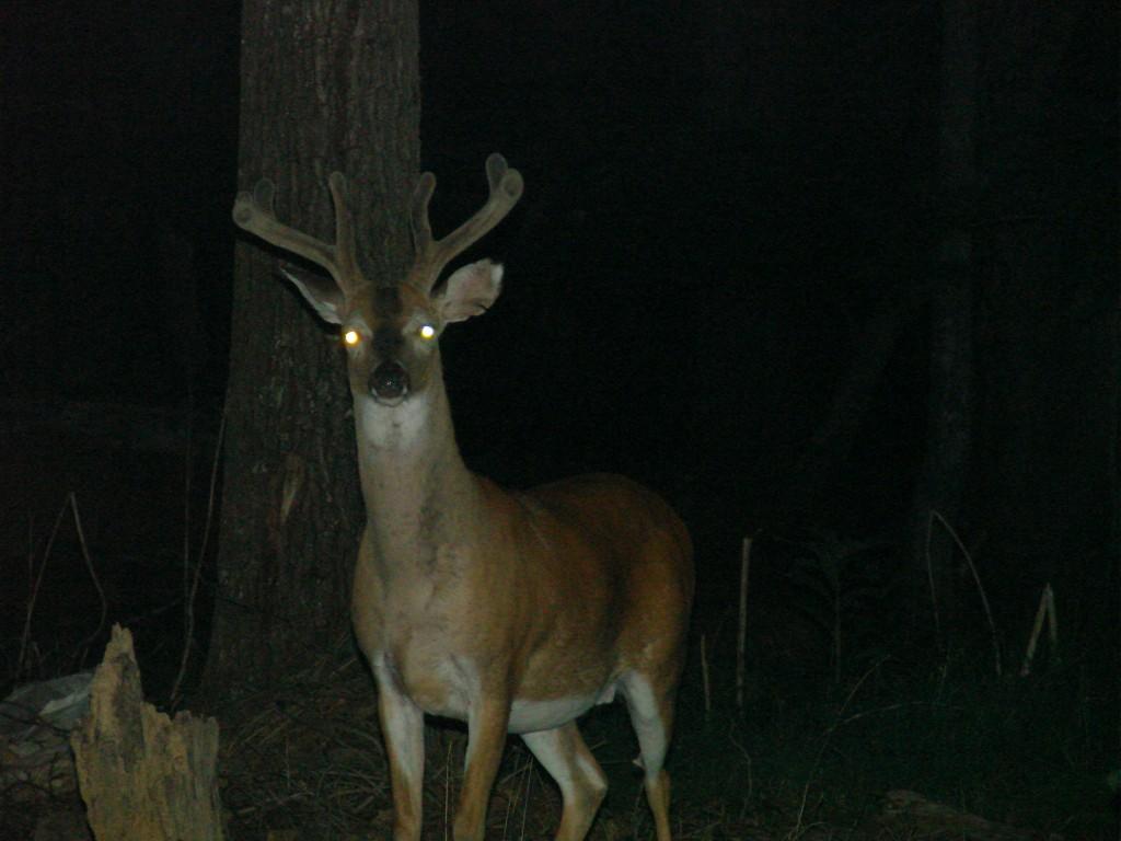 Deer! Headlights!